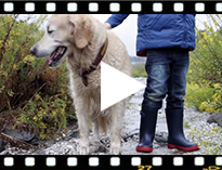 Video from Splash Tricolour Wellies for Kids