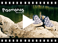 Video from Printed Clasticated Canvas Trainers With Espadrille Sole